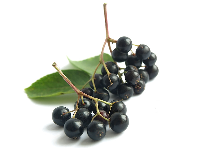 Elderberry seed oil