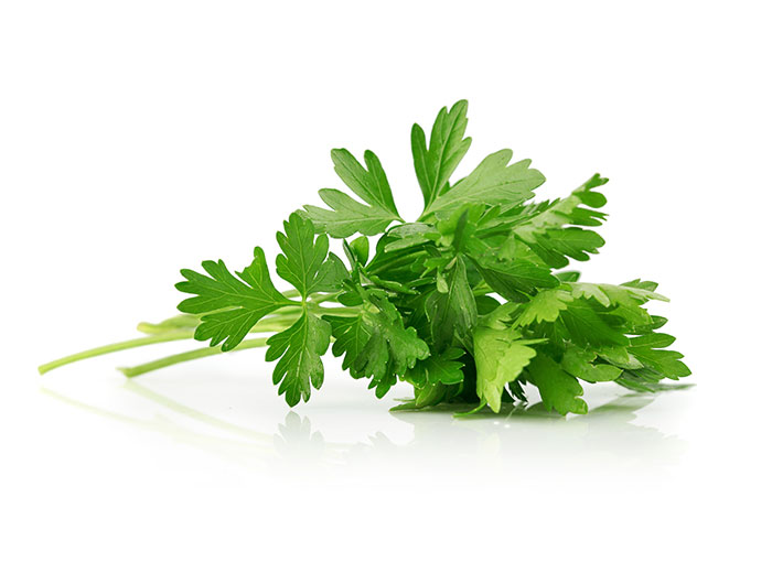 Parsley oil